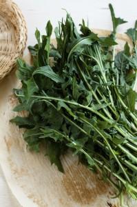 proprietà medicinali del tarassaco