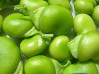 fave verdi